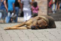 Tras aberrante matanza de animales, piden condenas más duras para los culpables