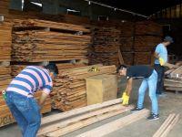 Un nuevo proyecto de ley podría reducir la deforestación y generar nuevos puestos de trabajo