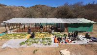 Montaron un invernadero para cultivar marihuana en Coronel Moldes