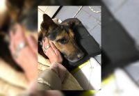 |IMÁGENES SENSIBLES| ¡Cobarde es poco! Denuncian a un salteño que apuñaló y mató a un perrito en un barrio privado