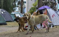 Instalan un puesto de asistencia para los perros que traerá la peregrinación