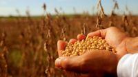El precio internacional de la soja volvió a subir y no encuentra techo