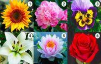 Test de la flor. Fuente: (Twitter)