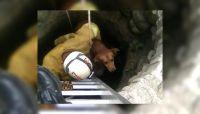 Liberen al Toby: así rescataron los bomberos a un perrito que cayó en un pozo del interior salteño