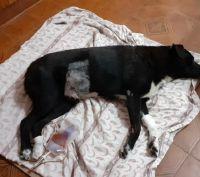 Ayudanos a salvar la vida de Negrito