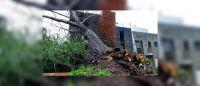 De terror: una familia pensó que era un temblor, pero un sauce llorón les había destrozado la casa