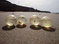 Personas vacacionando en Mar de Plata aplastaron huevos de caracoles en peligro de extinción