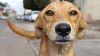 El cruel video de un perro que es arrastrado por una moto en Santiago del Estero genera indignación