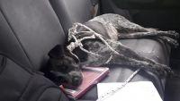 Subió a la Quebrada de San Lorenzo y solo regresó su mascota: se inició una búsqueda intensa