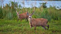 Masivo repudio a un cazador que mató a un ciervo y publicó las fotos en las redes