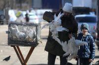 Rusia detectó el primer caso de gripe aviar y el mundo se pone en alerta