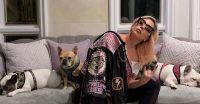 Lady Gaga víctima de un angustiante momento: Le robaron dos de sus tres perros