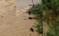 Alrededor de 100 policías trabajan a contrarreloj en el Río Bermejo
