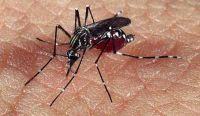 Dengue. Fuente: (Twitter)