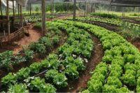 Cuidado ambiental: Salta apunta a la producción orgánica