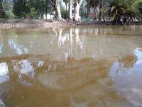 |TERRIBLES FOTOS| El deplorable estado del lago del Parque San Martín: Concejales piden una inspección