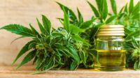 Cultivo de cannabis: se firmó un convenio para producir en la provincia con fines medicinales