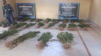 Narcotráfico: descubrieron una mega plantación de marihuana en Salta