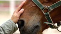 Maltrato animal: un caballo fue la víctima de este repudiable hecho ocurrido en Salta