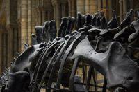 ¡No es Quique Prado! Hallan restos fósiles de dinosaurios en Aguaray