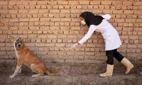 Tras más de 10 años sin casos, una mujer murió de rabia: no se contagió de un perro