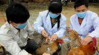 Se detectó en China el primer caso mundial de gripe aviar H10N3 en humanos