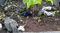 |TERRIBLES FOTOS| ¿Mal augurio? Preocupa el hallazgo de aves muertas en la Plaza 9 de Julio