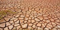 """ONU: """"La sequía está a punto de convertirse en la próxima pandemia y no hay vacuna para curarla"""""""