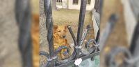 ¡Pobre pichicho! Salteños sin corazón dejaron encerrado a un perrito callejero en una conocida escuela