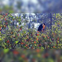 Hermosas postales: los tucanes coparon el Parque San Martín para el deleite de todos los salteños